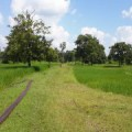 A well Situated 9 Rai Plot of Land, Buriram