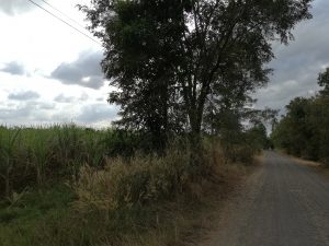 Two Plots with Approximately 4,5 Rai Sugarcane near Buriram Centre at Buriram for 1,8 Million Baht for both plots