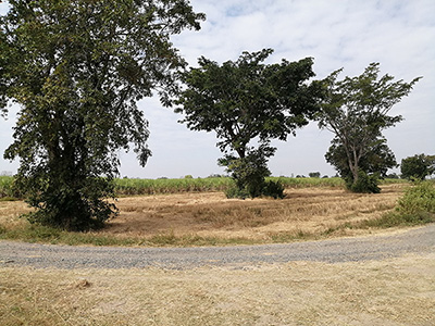 An Attractive Plot of 14 Rai Agricultural Land in Buriram
