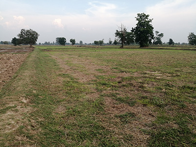 A Plot of Agricultural Land near Buriram Centre