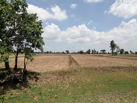 13 Rai Agricultural Land in Huai Rat – Buriram