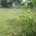 An excellent 2 Rai plot of land, Buriram