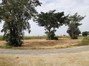 An Attractive Plot of 14 Rai Agricultural Land in Buriram at Buriram for 2 Million Baht