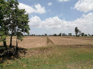 13 Rai Agricultural Land in Huai Rat – Buriram at Buriram - Huai Rat for 2.5 Million Baht